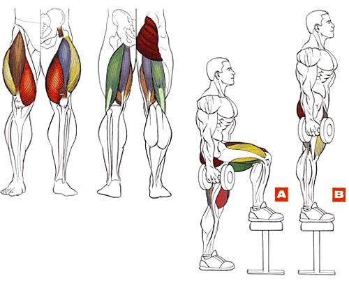Тренировать ноги в домашних условиях
